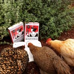 My Chickens Love a Good Novel!