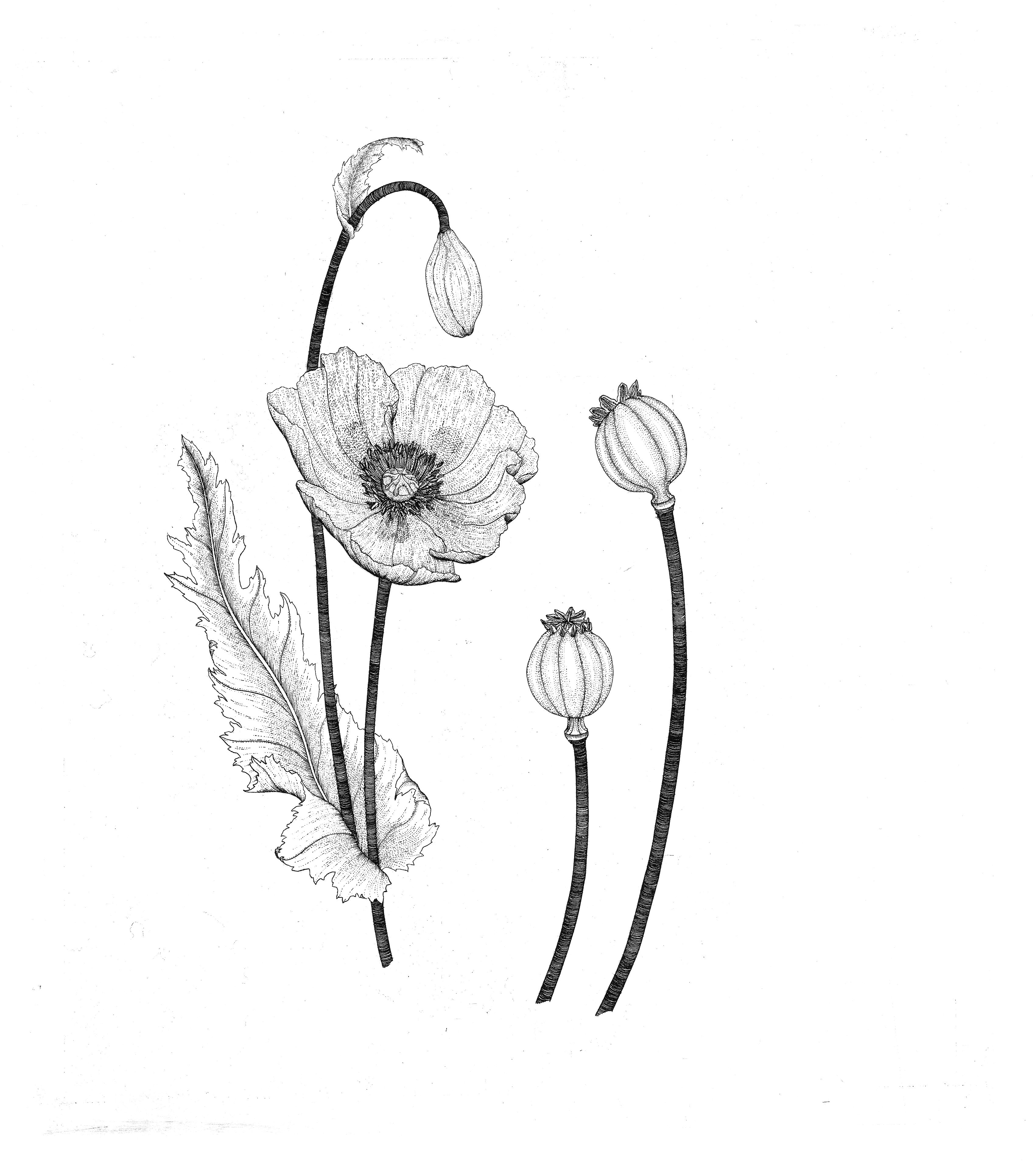 Wicked Plant Artwork Amy Stewart